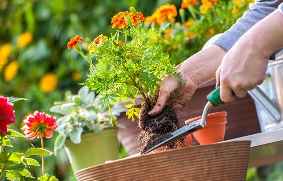 Gardening Mistakes You are Not Aware of While Attempting It