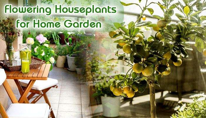 Top 5 Flowering Houseplants for Freshen up your Garden