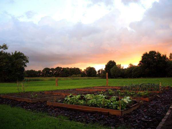 The Perfect Soil for Growing Vegetables