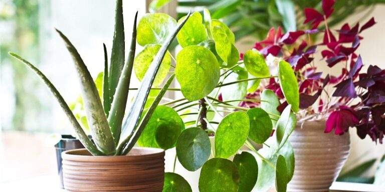Attractive succulent idea that will beautify your space