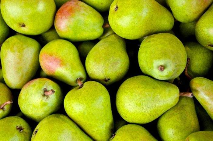 Buying Pear Trees Online