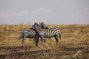 Excursions and vacations in Tanzania and Zanzibar