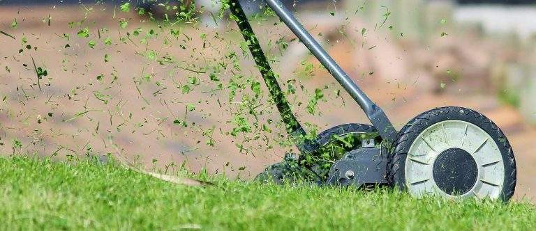 7 Lawn Care Tips You Ought To Embrace